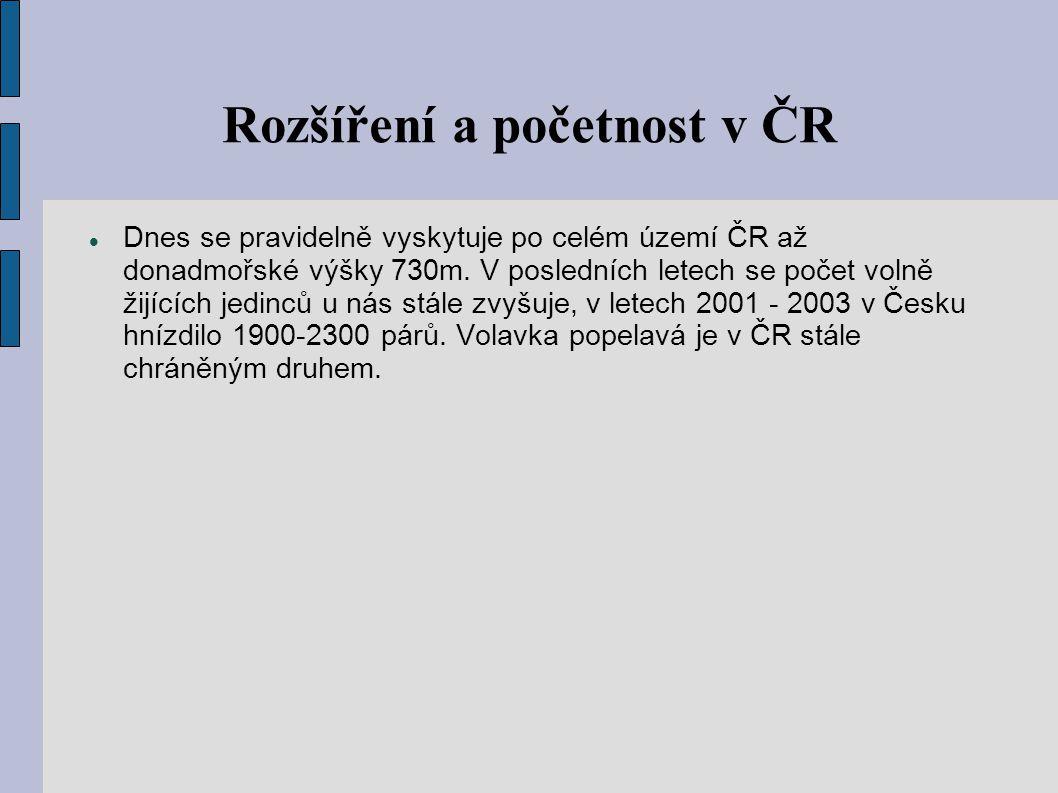 Rozšíření a početnost v ČR Dnes se pravidelně vyskytuje po celém území ČR až donadmořské výšky 730m. V posledních letech se počet volně žijících jedin