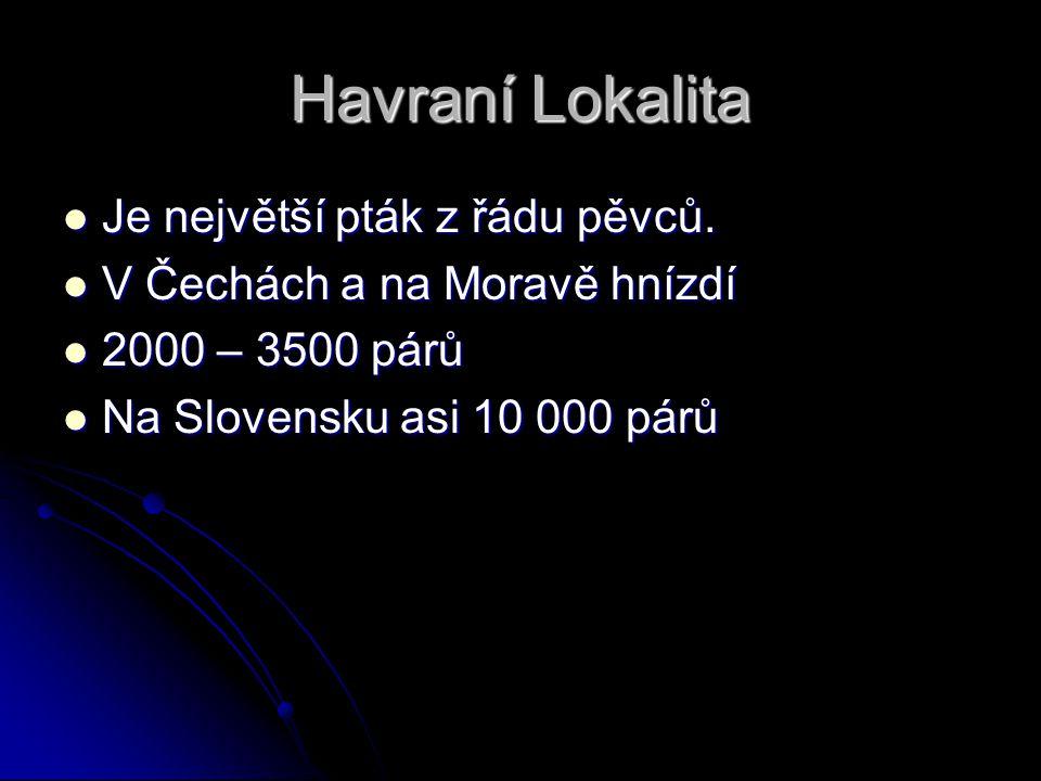 Havraní Lokalita Je největší pták z řádu pěvců. Je největší pták z řádu pěvců. V Čechách a na Moravě hnízdí V Čechách a na Moravě hnízdí 2000 – 3500 p