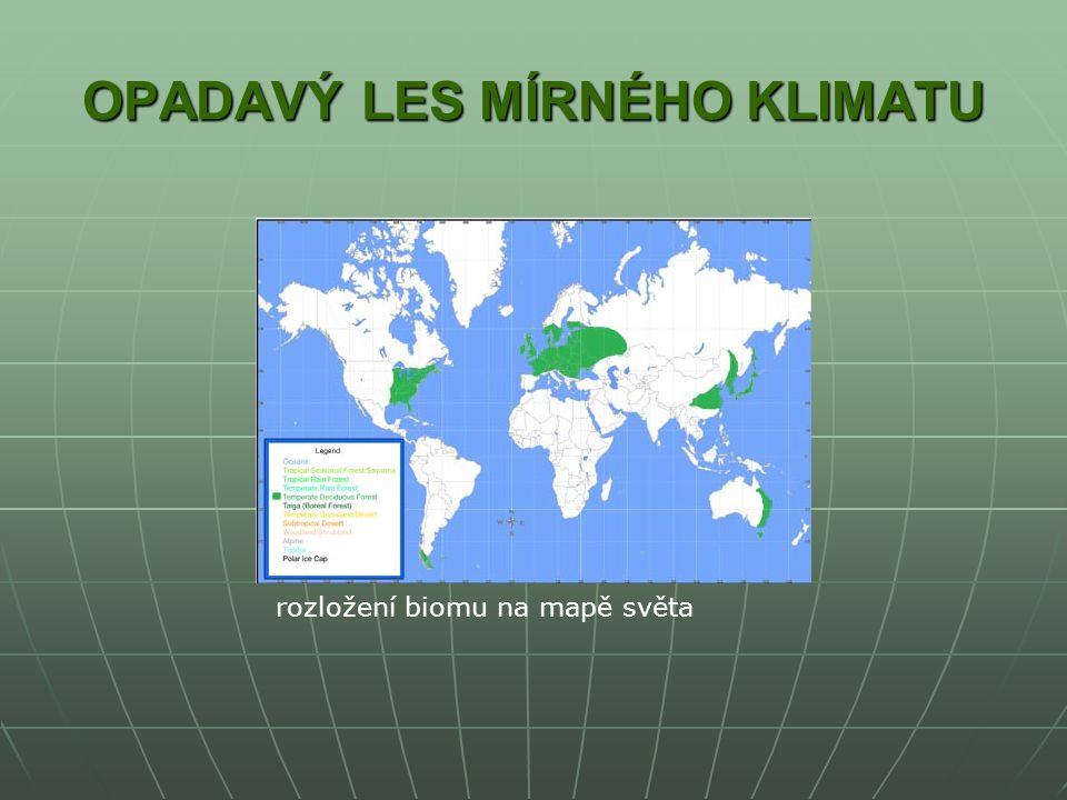 OPADAVÝ LES MÍRNÉHO KLIMATU rozložení biomu na mapě světa