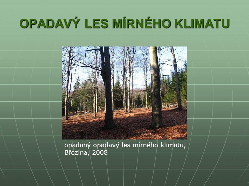OPADAVÝ LES MÍRNÉHO KLIMATU opadaný opadavý les mírného klimatu, Březina, 2008