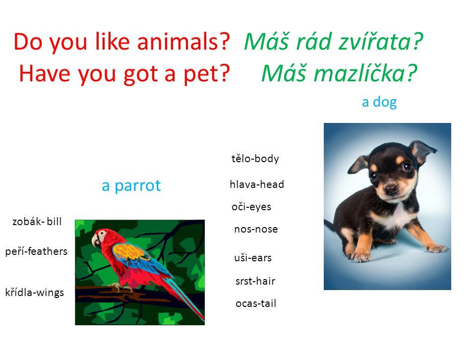 Do you like animals? Máš rád zvířata? Have you got a pet? Máš mazlíčka? křídla-wings ocas-tail hlava-head tělo-body peří-feathers zobák- bill oči-eyes