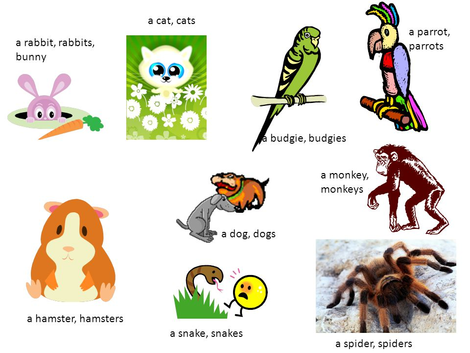 a cat, cats a parrot, parrots a hamster, hamsters a snake, snakes a budgie, budgies a monkey, monkeys a dog, dogs a spider, spiders a rabbit, rabbits, bunny