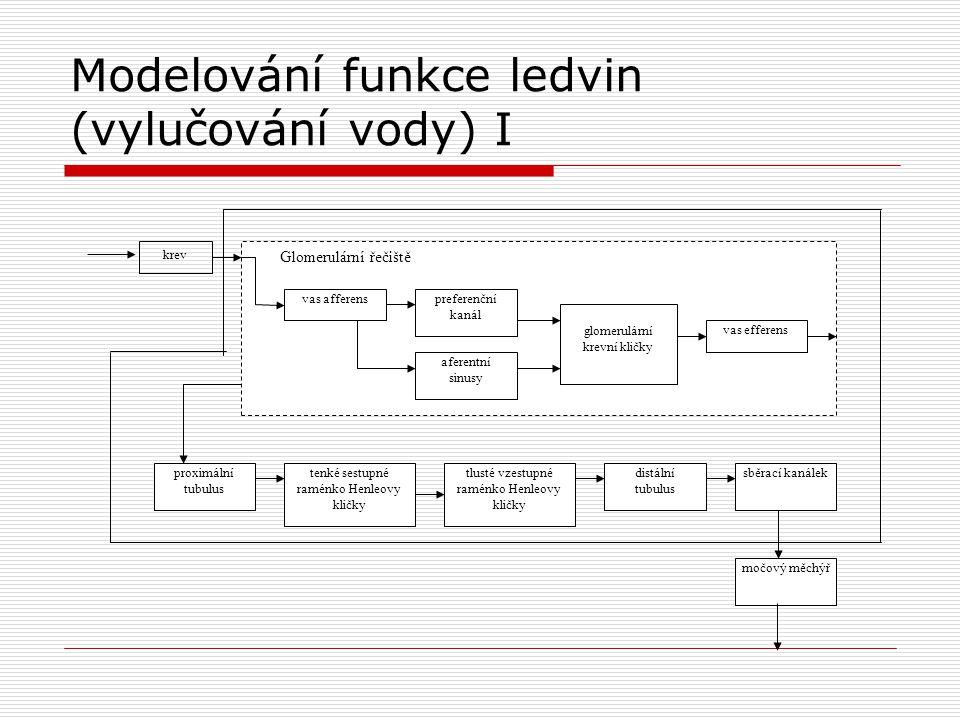 Modelování funkce ledvin (vylučování vody) I krev Glomerulární řečiště vas afferenspreferenční kanál aferentní sinusy glomerulární krevní kličky vas e