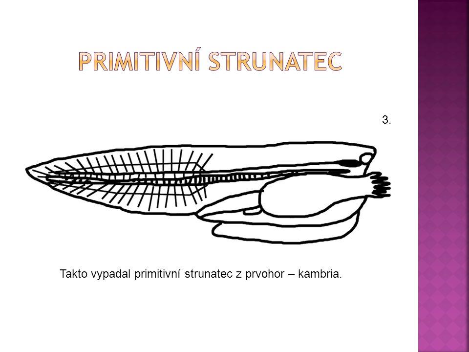 Takto vypadal primitivní strunatec z prvohor – kambria. 3.