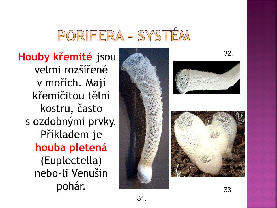 Houby křemité jsou velmi rozšířené v mořích. Mají křemičitou tělní kostru, často s ozdobnými prvky. Příkladem je houba pletená (Euplectella) nebo-li V