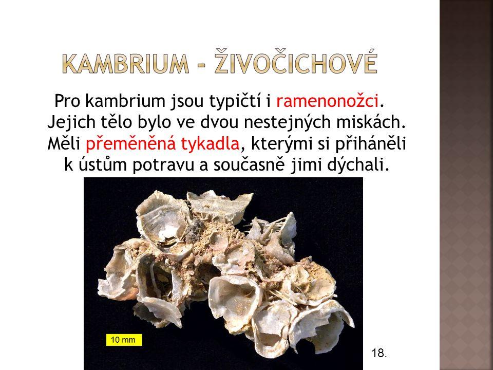 Pro kambrium jsou typičtí i ramenonožci.Jejich tělo bylo ve dvou nestejných miskách.