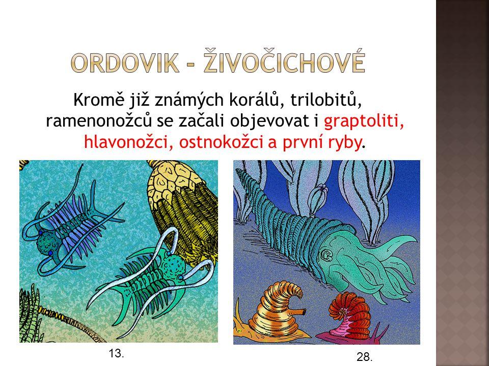 Kromě již známých korálů, trilobitů, ramenonožců se začali objevovat i graptoliti, hlavonožci, ostnokožci a první ryby.