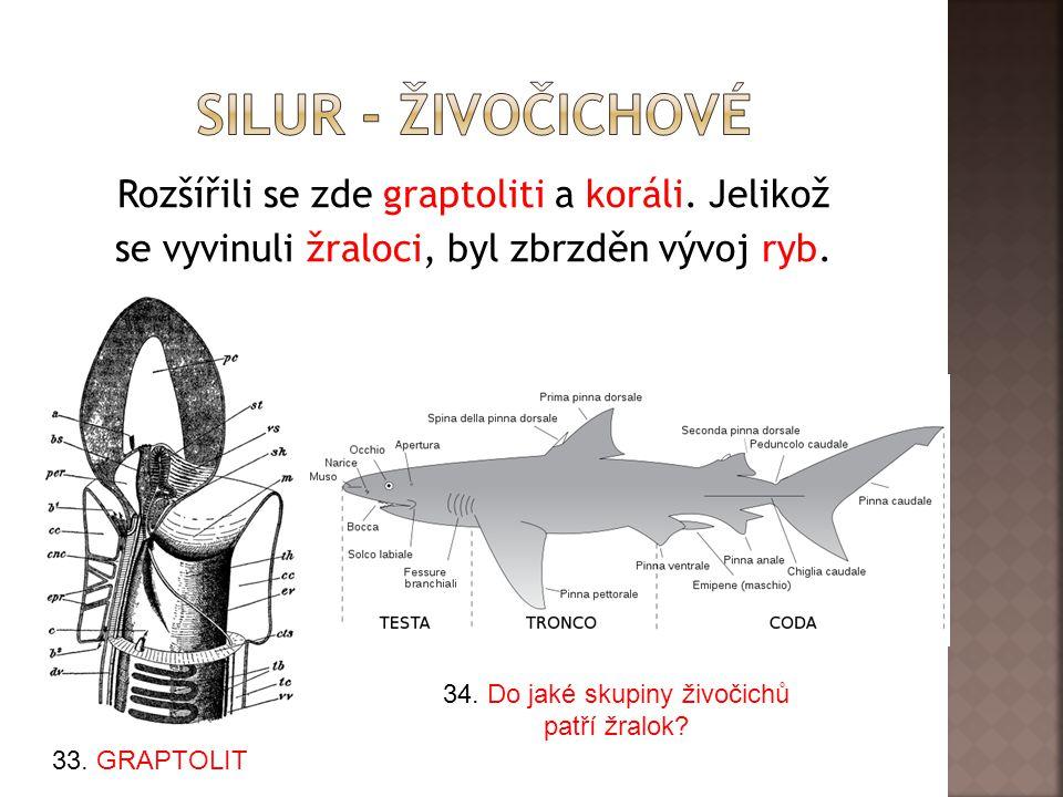 Rozšířili se zde graptoliti a koráli.Jelikož se vyvinuli žraloci, byl zbrzděn vývoj ryb.