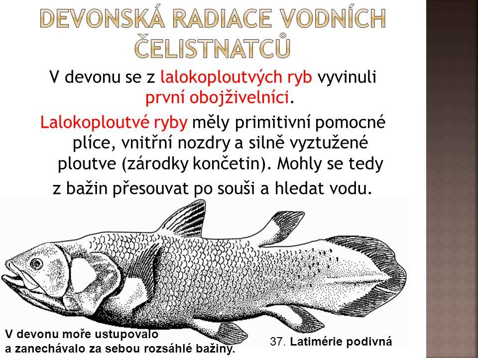 V devonu se z lalokoploutvých ryb vyvinuli první obojživelníci.