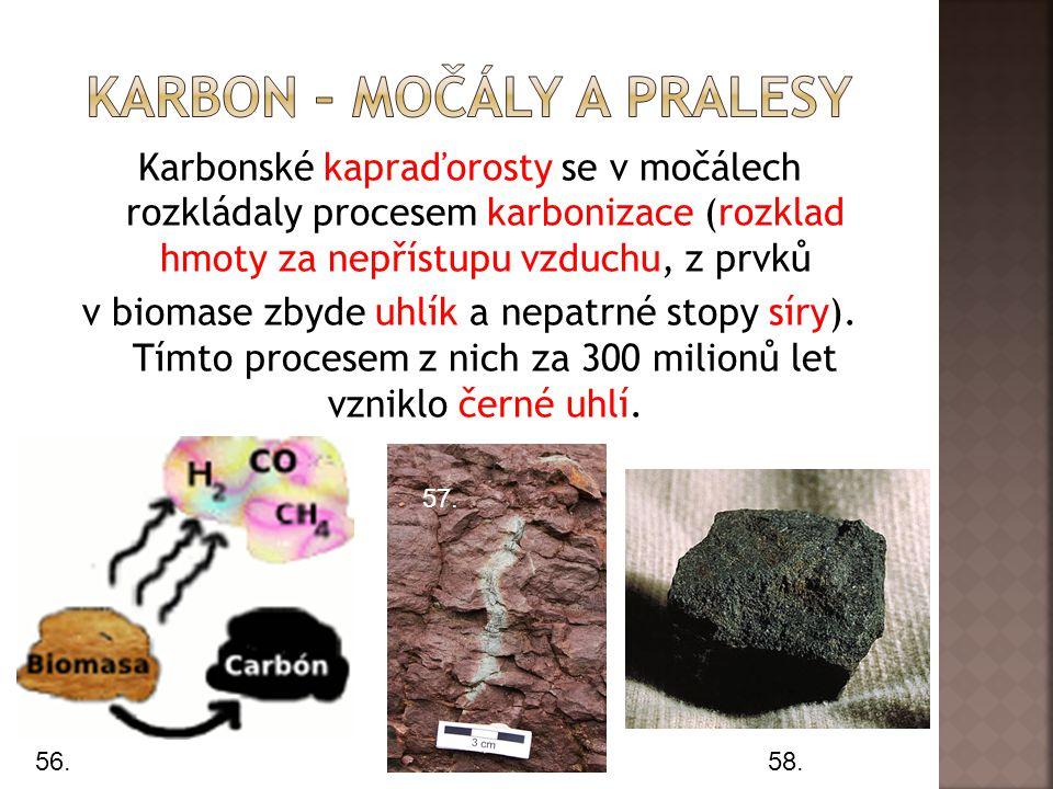 Karbonské kapraďorosty se v močálech rozkládaly procesem karbonizace (rozklad hmoty za nepřístupu vzduchu, z prvků v biomase zbyde uhlík a nepatrné stopy síry).