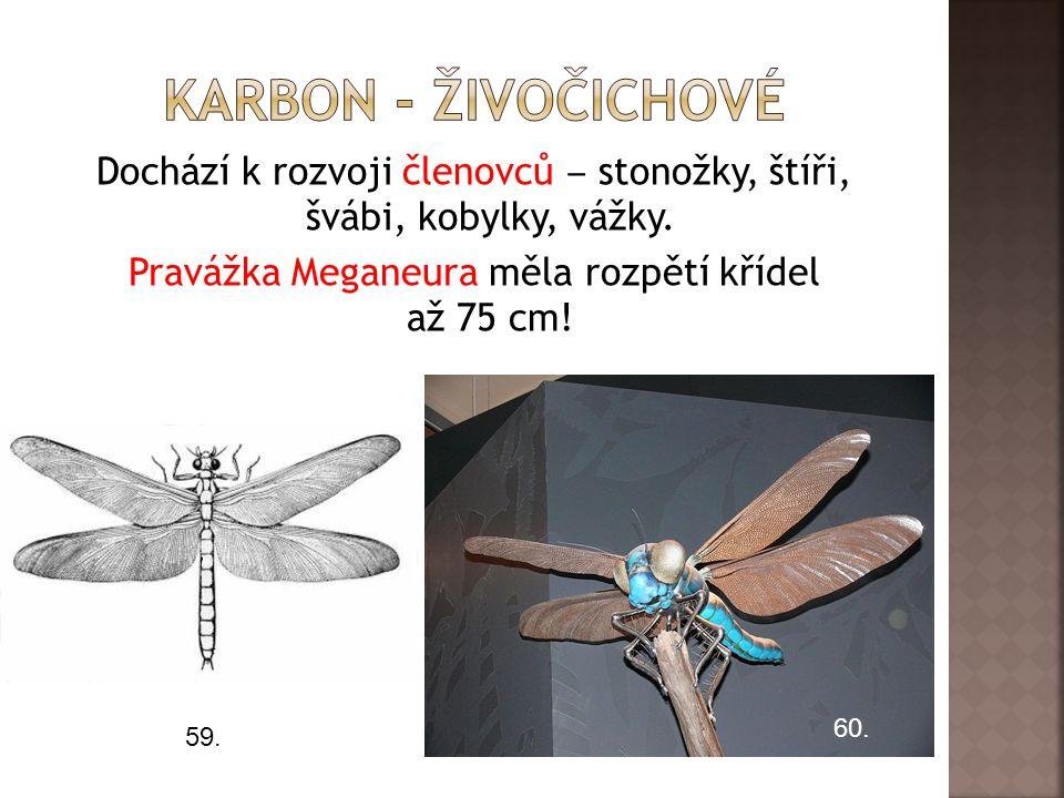 Dochází k rozvoji členovců ‒ stonožky, štíři, švábi, kobylky, vážky.