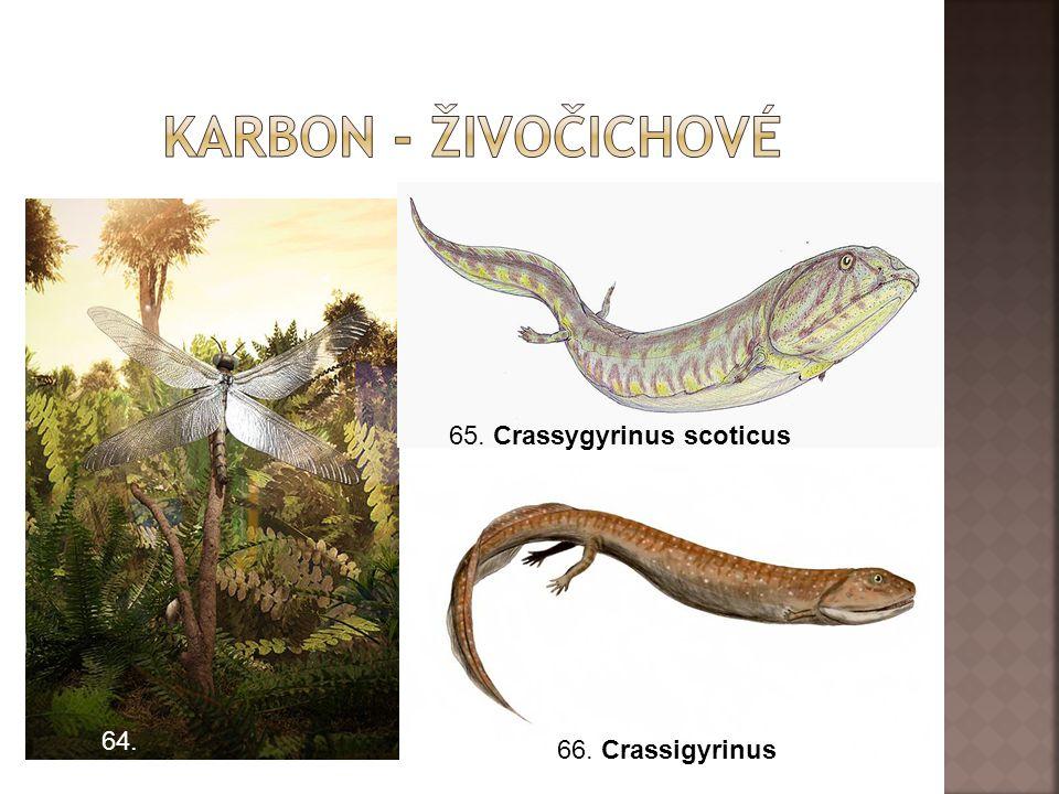 64. 65. Crassygyrinus scoticus 66. Crassigyrinus