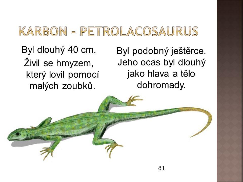 Byl dlouhý 40 cm.Živil se hmyzem, který lovil pomocí malých zoubků.