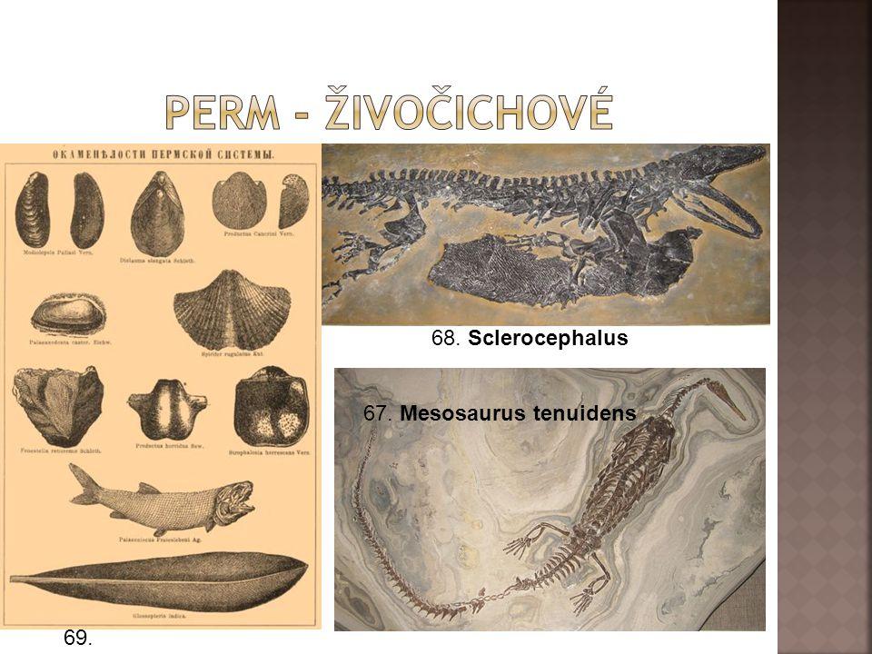 67. Mesosaurus tenuidens 68. Sclerocephalus 69.