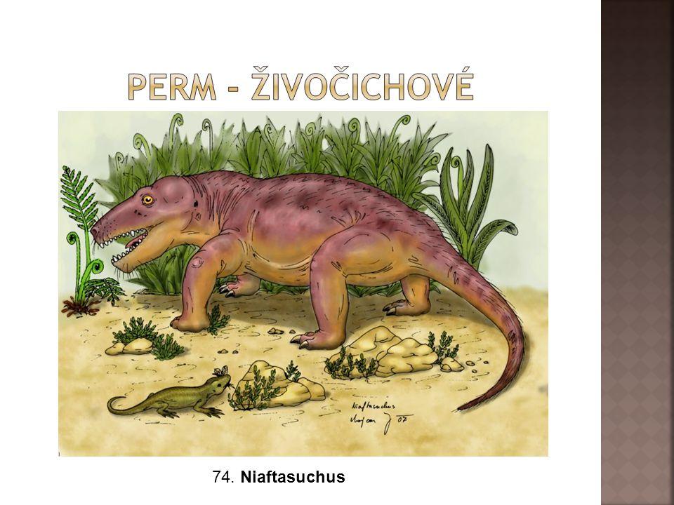74. Niaftasuchus