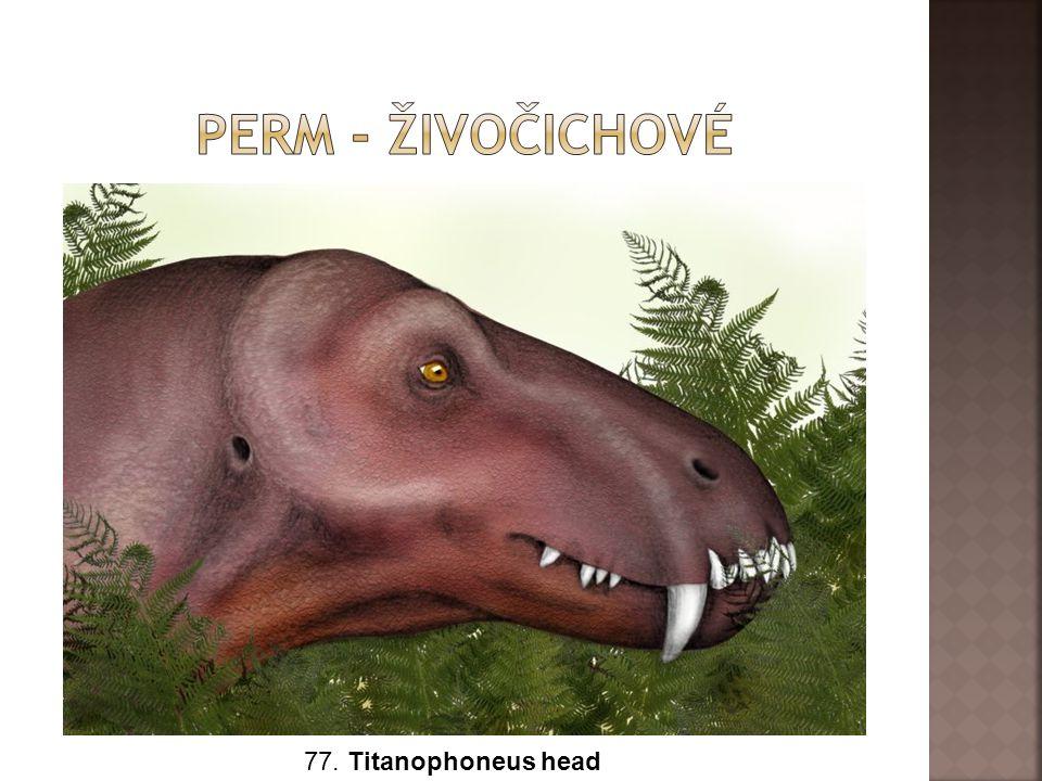77. Titanophoneus head