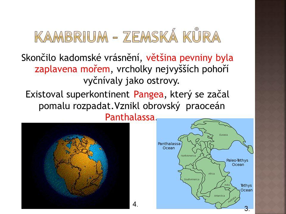 Rostliny kambria žily pouze v praoceánu Panthalasse a byly to sinice a mořské řasy.