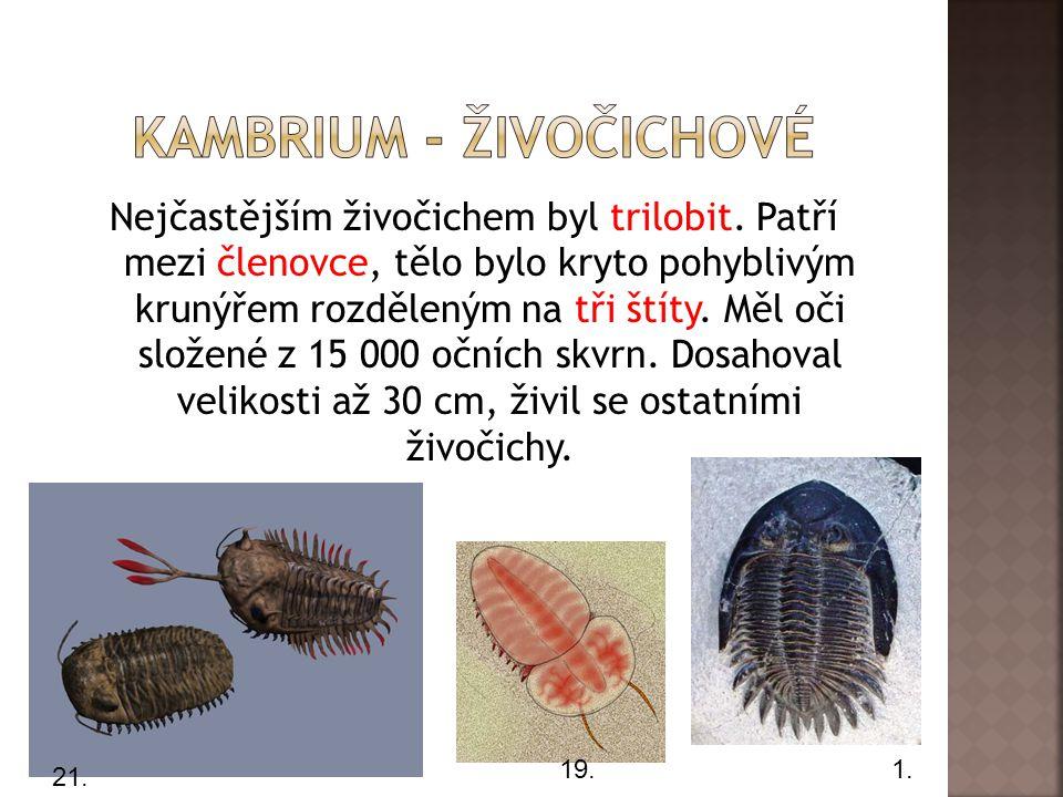 Nejčastějším živočichem byl trilobit.