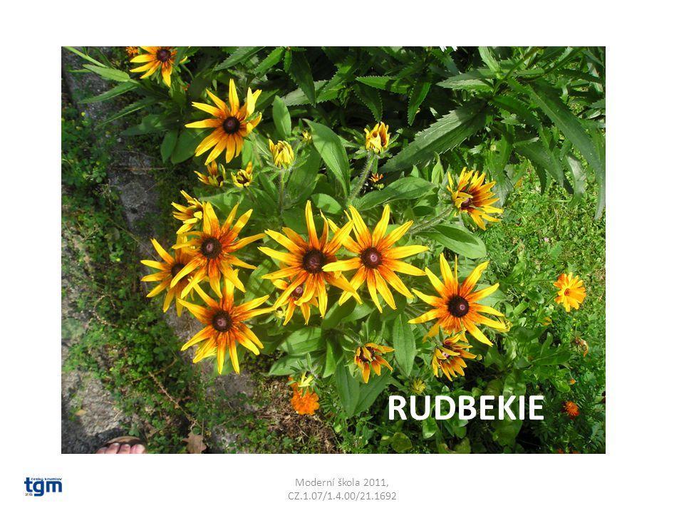 Moderní škola 2011, CZ.1.07/1.4.00/21.1692 RUDBEKIE