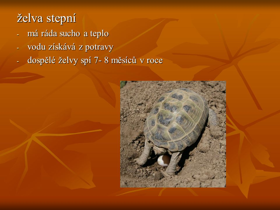 želva stepní - má ráda sucho a teplo - vodu získává z potravy - dospělé želvy spí 7- 8 měsíců v roce