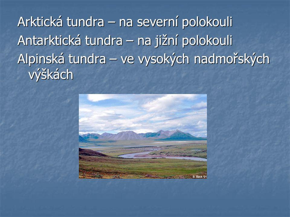 Arktická tundra – na severní polokouli Antarktická tundra – na jižní polokouli Alpinská tundra – ve vysokých nadmořských výškách