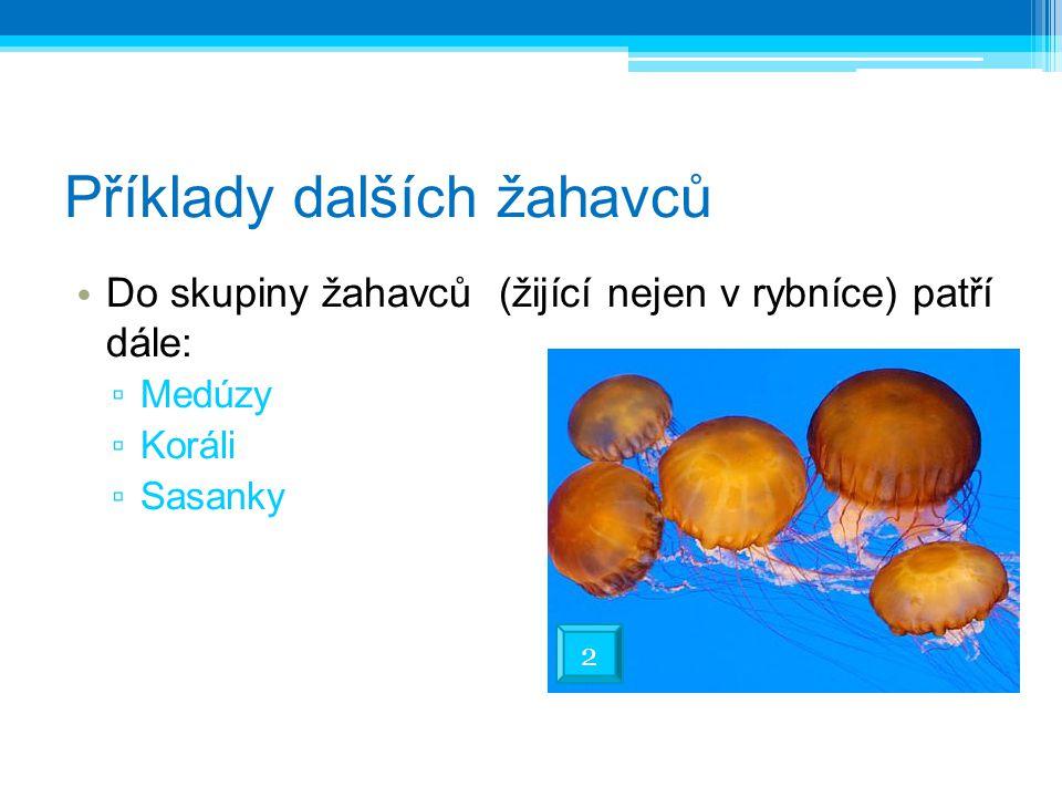 Příklady dalších žahavců Do skupiny žahavců (žijící nejen v rybníce) patří dále: ▫ Medúzy ▫ Koráli ▫ Sasanky 2