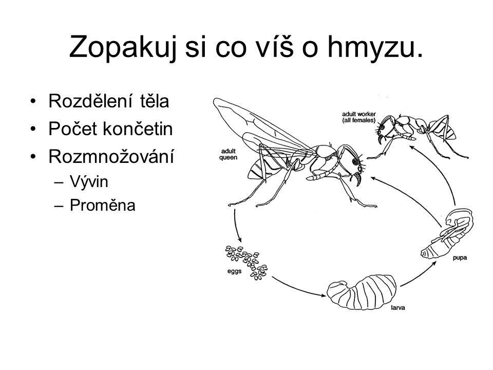 Bezobratlí v sadech Třída: hmyz –Řád: stejnokřídlí mšice – škůdce, sají rostlinné šťávy