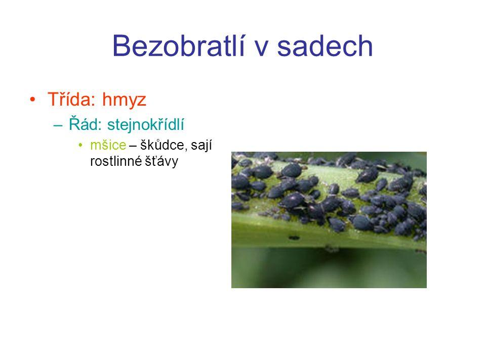 Řád: síťokřídlí –zlatoočka obecná Řád: dvoukřídlí –pestřenka rybízová –larvy se živí jiným hmyzem