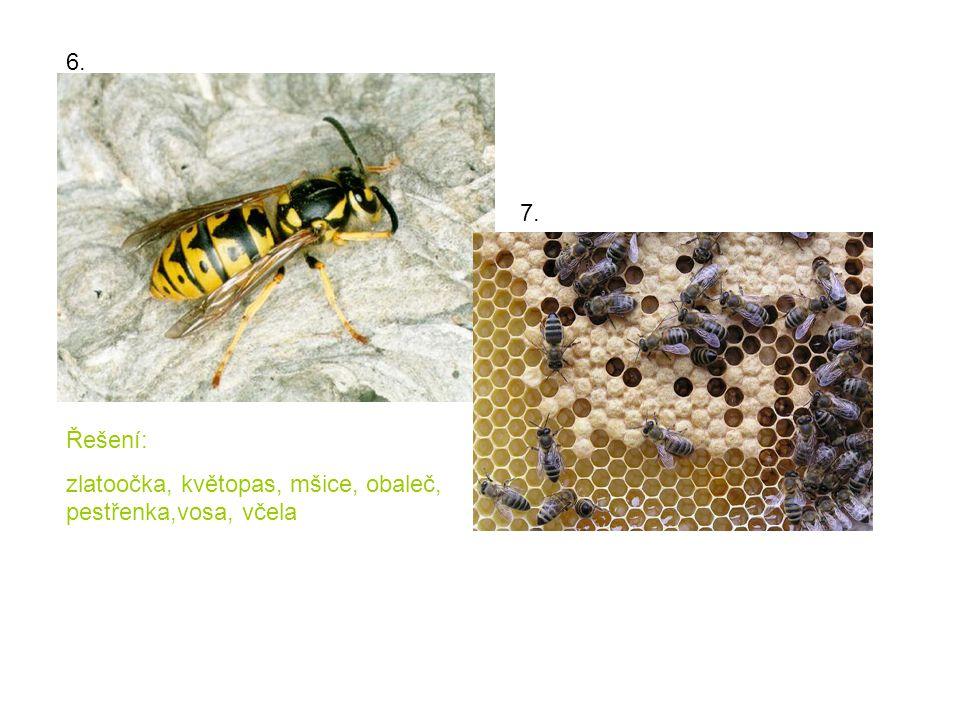 6. 7. Řešení: zlatoočka, květopas, mšice, obaleč, pestřenka,vosa, včela