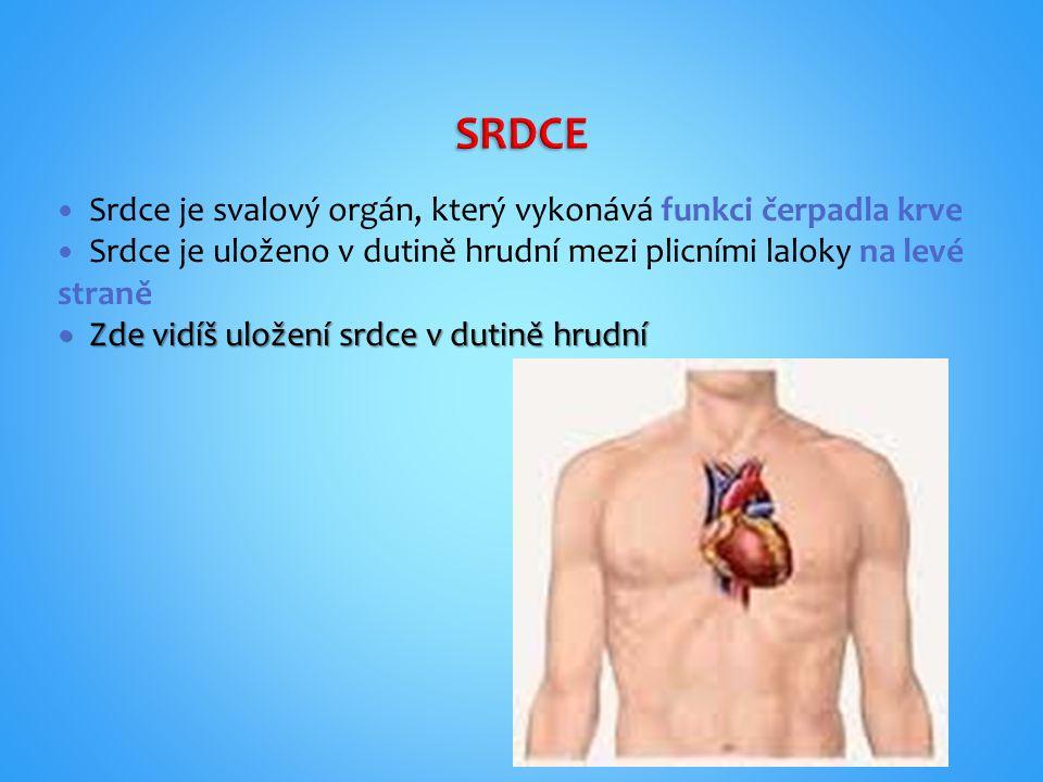 Srdce je svalový orgán, který vykonává funkci čerpadla krve Srdce je uloženo v dutině hrudní mezi plicními laloky na levé straně Zde vidíš uložení srd