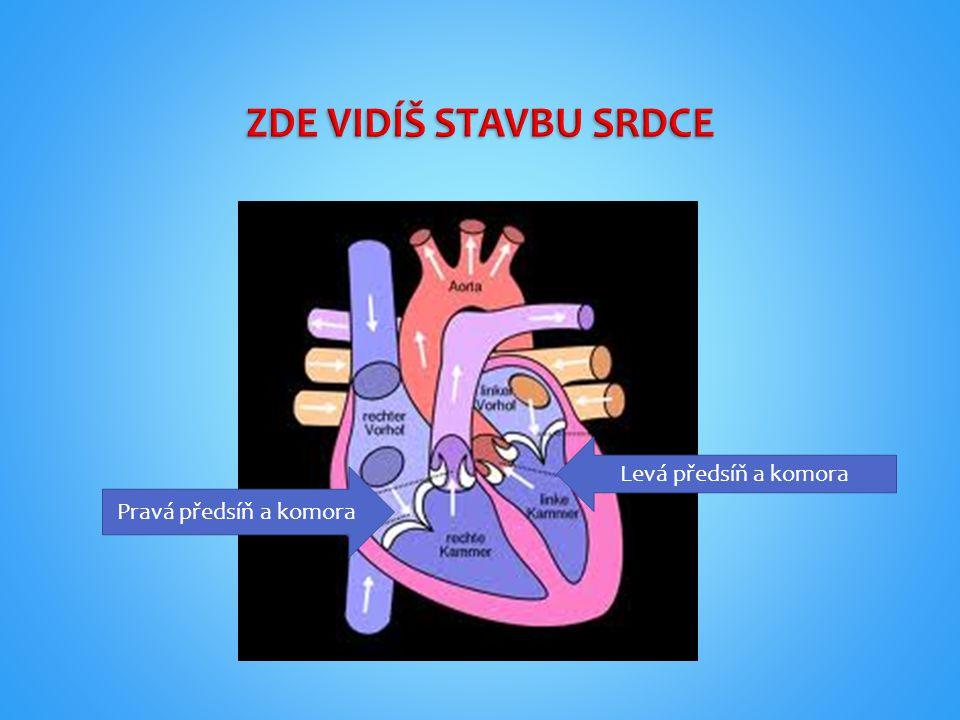 Cévní soustava se skládá z: 1.tepen 2. žil 3.