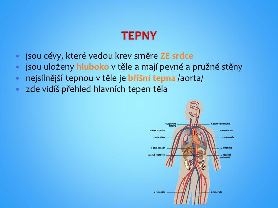 Jsou cévy, které vedou krev směrem K srdci Jsou uloženy více na povrchu těla Můžeš je vidět pouhým okem Největšími žílami v těle jsou horní a dolní dutá žíla Zde vidíš využití žilního přístupu v lékařství