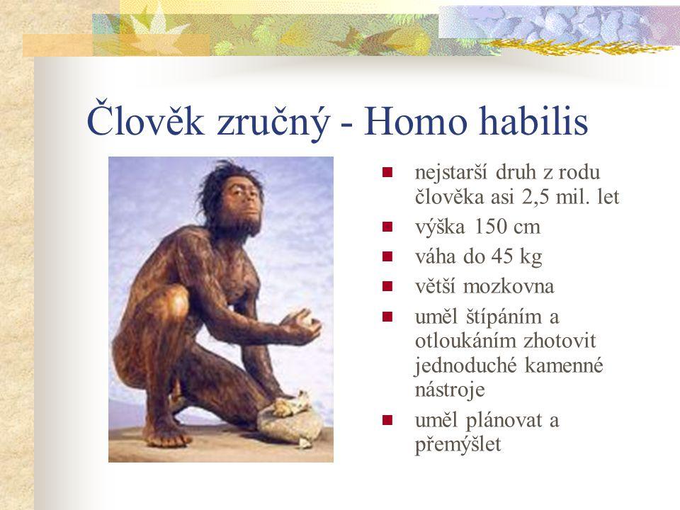 Australopiték - Australopithecus výška 120 cm váha do 35 kg lebka připomínala spíše lebku opice chrup se blížil člověku žil v prostředí afrických step