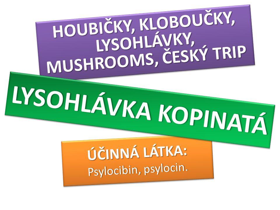 ÚČINNÁ LÁTKA: Psylocibin, psylocin.Psylocibin, psylocin. ÚČINNÁ LÁTKA: Psylocibin, psylocin.Psylocibin, psylocin. HOUBIČKY, KLOBOUČKY, LYSOHLÁVKY, MUS