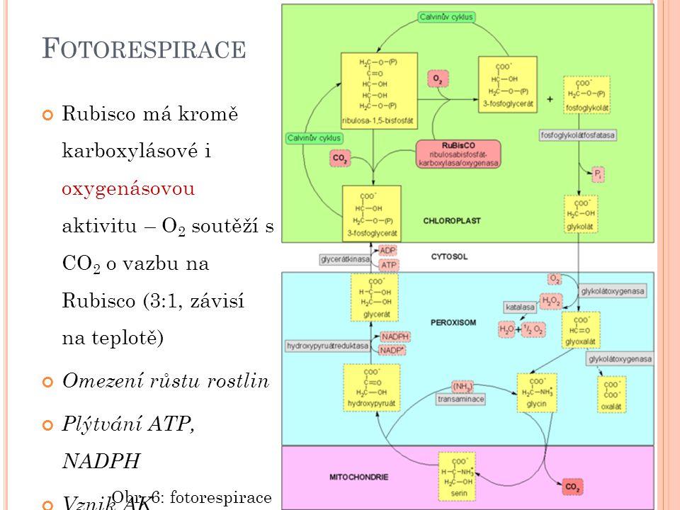 F OTORESPIRACE Rubisco má kromě karboxylásové i oxygenásovou aktivitu – O 2 soutěží s CO 2 o vazbu na Rubisco (3:1, závisí na teplotě) Omezení růstu r