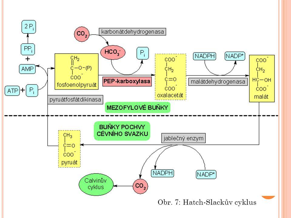 Obr. 7: Hatch-Slackův cyklus