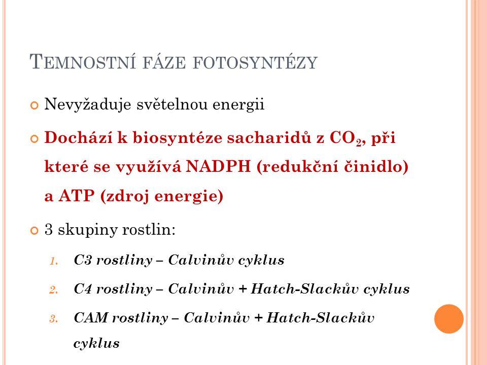 T EMNOSTNÍ FÁZE FOTOSYNTÉZY Nevyžaduje světelnou energii Dochází k biosyntéze sacharidů z CO 2, při které se využívá NADPH (redukční činidlo) a ATP (z