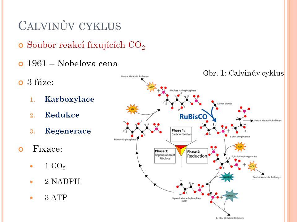 C ALVINŮV CYKLUS Soubor reakcí fixujících CO 2 1961 – Nobelova cena 3 fáze: 1. Karboxylace 2. Redukce 3. Regenerace Fixace: 1 CO 2 2 NADPH 3 ATP Obr.