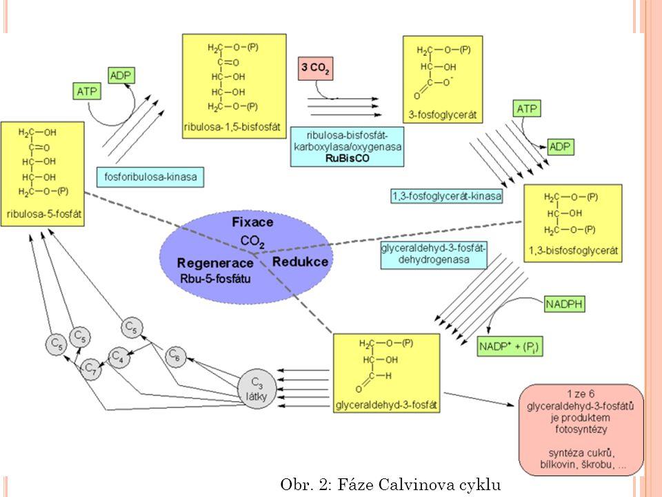Obr. 2: Fáze Calvinova cyklu