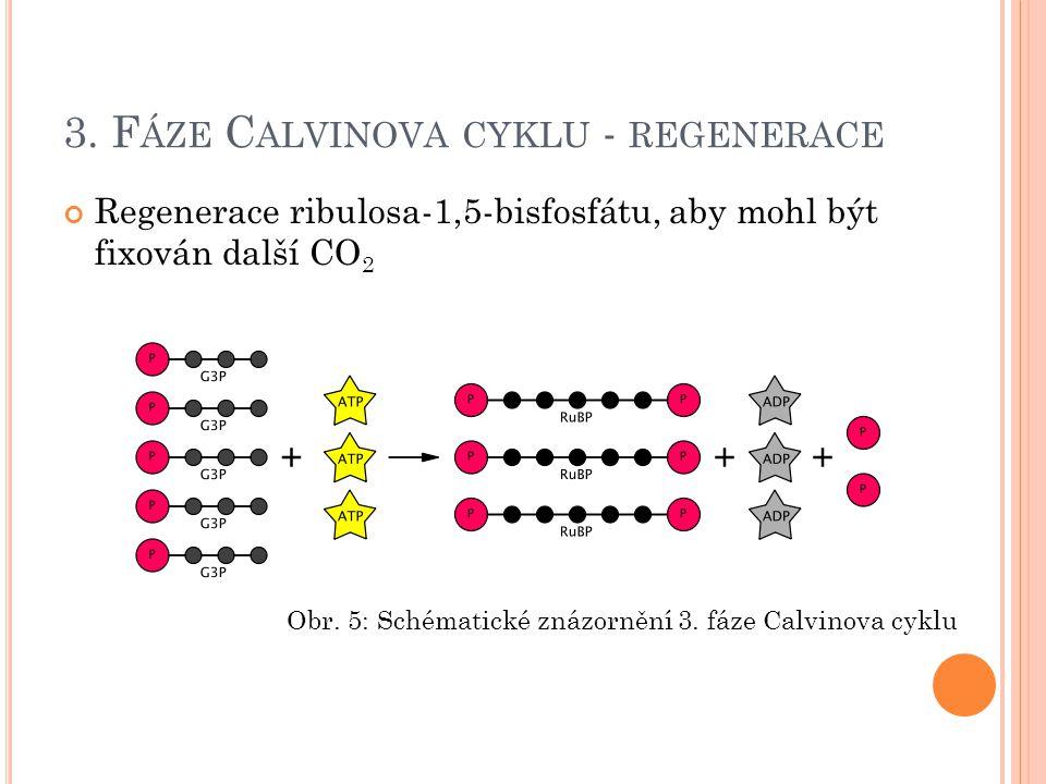 3. F ÁZE C ALVINOVA CYKLU - REGENERACE Regenerace ribulosa-1,5-bisfosfátu, aby mohl být fixován další CO 2 Obr. 5: Schématické znázornění 3. fáze Calv