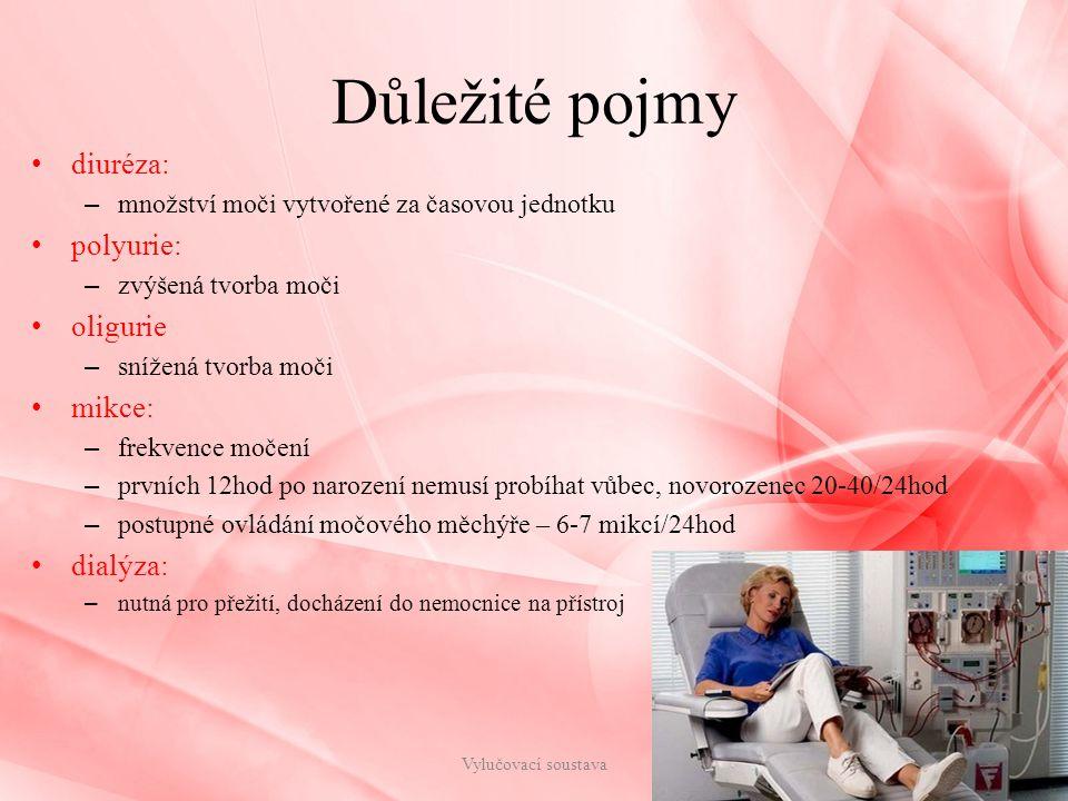 Důležité pojmy diuréza: – množství moči vytvořené za časovou jednotku polyurie: – zvýšená tvorba moči oligurie – snížená tvorba moči mikce: – frekvence močení – prvních 12hod po narození nemusí probíhat vůbec, novorozenec 20-40/24hod – postupné ovládání močového měchýře – 6-7 mikcí/24hod dialýza: – nutná pro přežití, docházení do nemocnice na přístroj Vylučovací soustava13