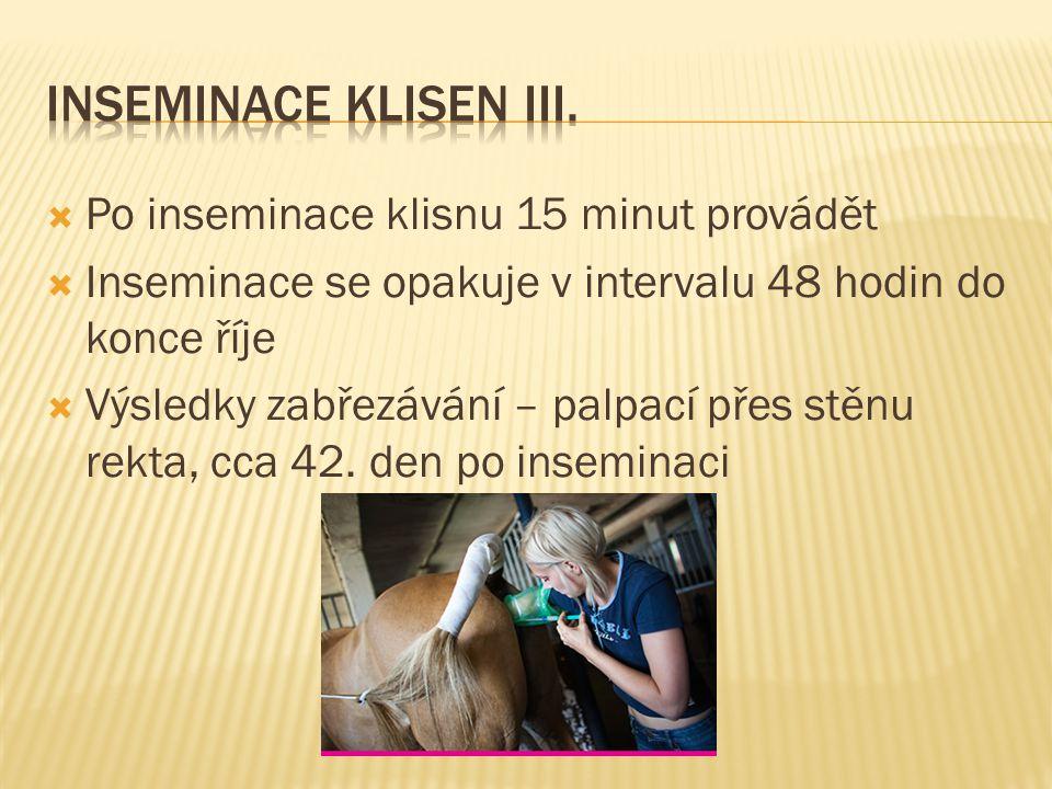  Po inseminace klisnu 15 minut provádět  Inseminace se opakuje v intervalu 48 hodin do konce říje  Výsledky zabřezávání – palpací přes stěnu rekta,