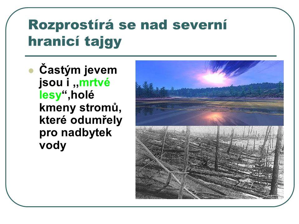 Rozprostírá se nad severní hranicí tajgy Častým jevem jsou i,,mrtvé lesy ,holé kmeny stromů, které odumřely pro nadbytek vody