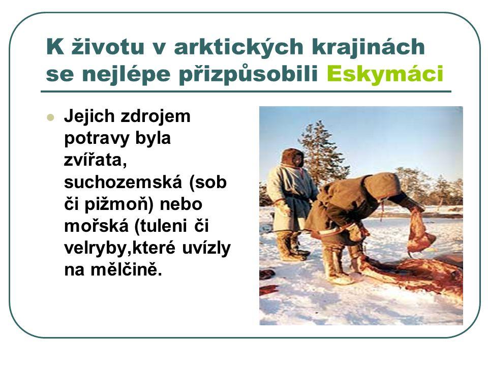 K životu v arktických krajinách se nejlépe přizpůsobili Eskymáci Jejich zdrojem potravy byla zvířata, suchozemská (sob či pižmoň) nebo mořská (tuleni či velryby,které uvízly na mělčině.