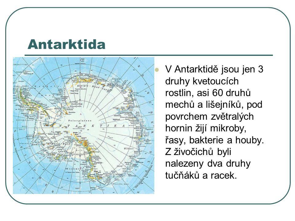 Antarktida V Antarktidě jsou jen 3 druhy kvetoucích rostlin, asi 60 druhů mechů a lišejníků, pod povrchem zvětralých hornin žijí mikroby, řasy, bakterie a houby.
