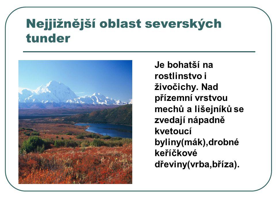 Nejjižnější oblast severských tunder Je bohatší na rostlinstvo i živočichy.