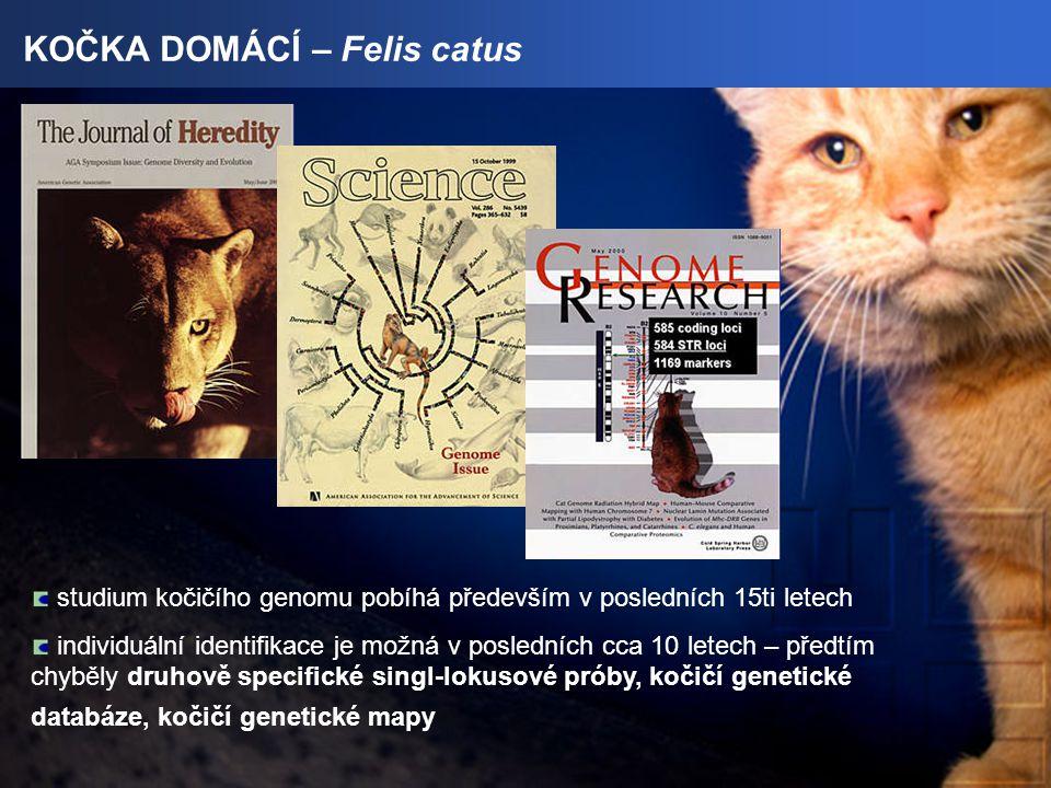 KOČKA DOMÁCÍ – Felis catus studium kočičího genomu pobíhá především v posledních 15ti letech individuální identifikace je možná v posledních cca 10 letech – předtím chyběly druhově specifické singl-lokusové próby, kočičí genetické databáze, kočičí genetické mapy