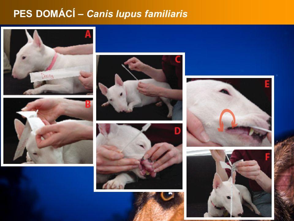 PES DOMÁCÍ – Canis lupus familiaris