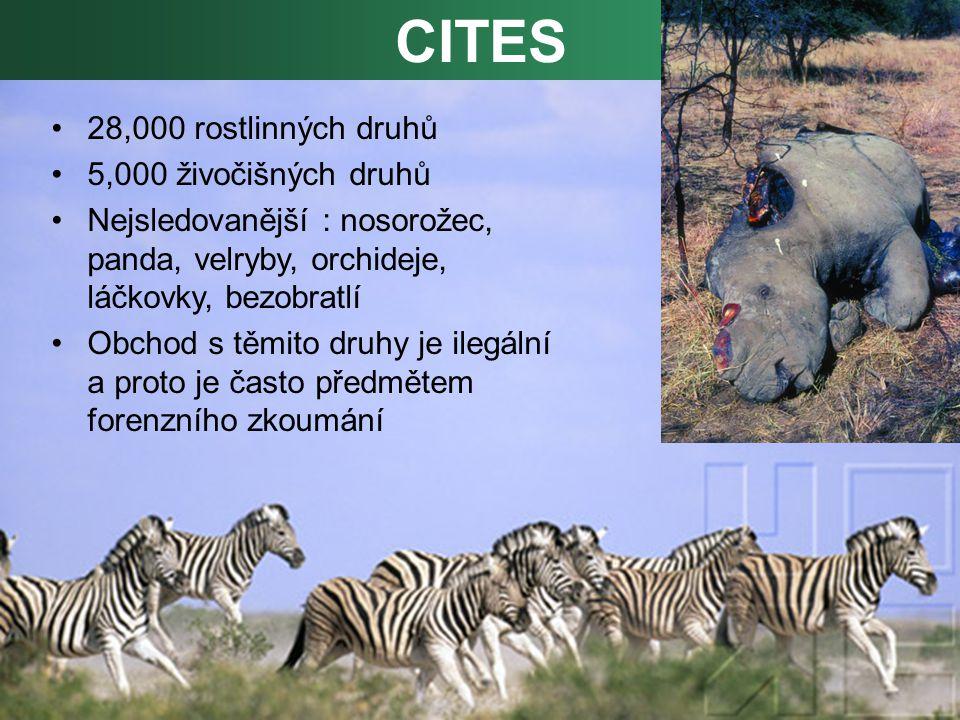 28,000 rostlinných druhů 5,000 živočišných druhů Nejsledovanější : nosorožec, panda, velryby, orchideje, láčkovky, bezobratlí Obchod s těmito druhy je ilegální a proto je často předmětem forenzního zkoumání CITES