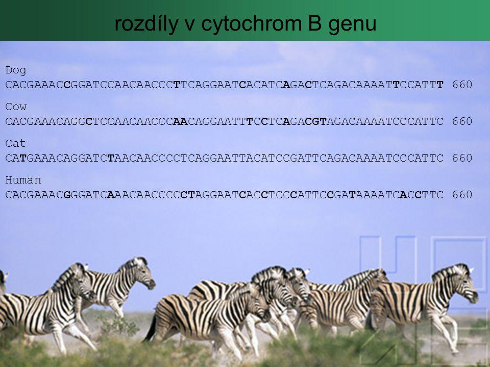 rozdíly v cytochrom B genu Dog CACGAAACCGGATCCAACAACCCTTCAGGAATCACATCAGACTCAGACAAAATTCCATTT 660 Cow CACGAAACAGGCTCCAACAACCCAACAGGAATTTCCTCAGACGTAGACAAAATCCCATTC 660 Cat CATGAAACAGGATCTAACAACCCCTCAGGAATTACATCCGATTCAGACAAAATCCCATTC 660 Human CACGAAACGGGATCAAACAACCCCCTAGGAATCACCTCCCATTCCGATAAAATCACCTTC 660